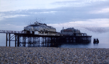 Starlings on the West Pier